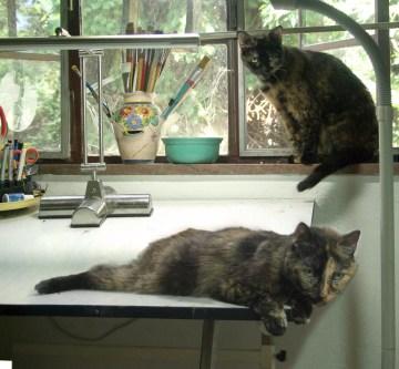 two tortoiseshell cats in studio