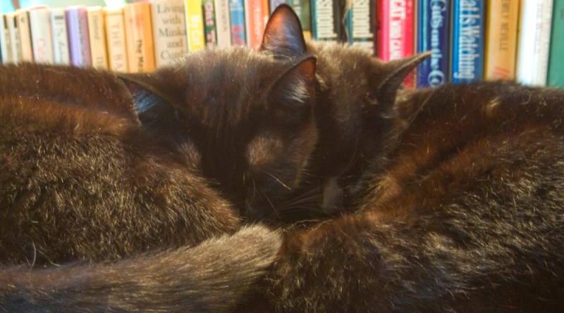 two black cats with cat books