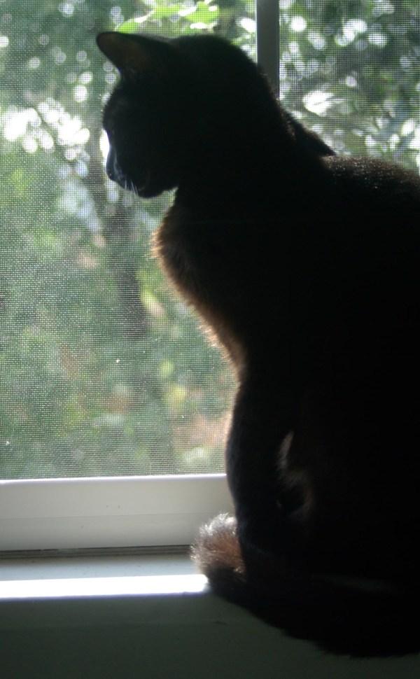 black cat silhouette in window