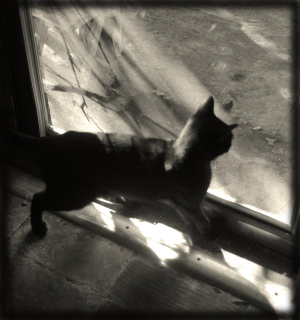 photo of black cat in sun and shadow