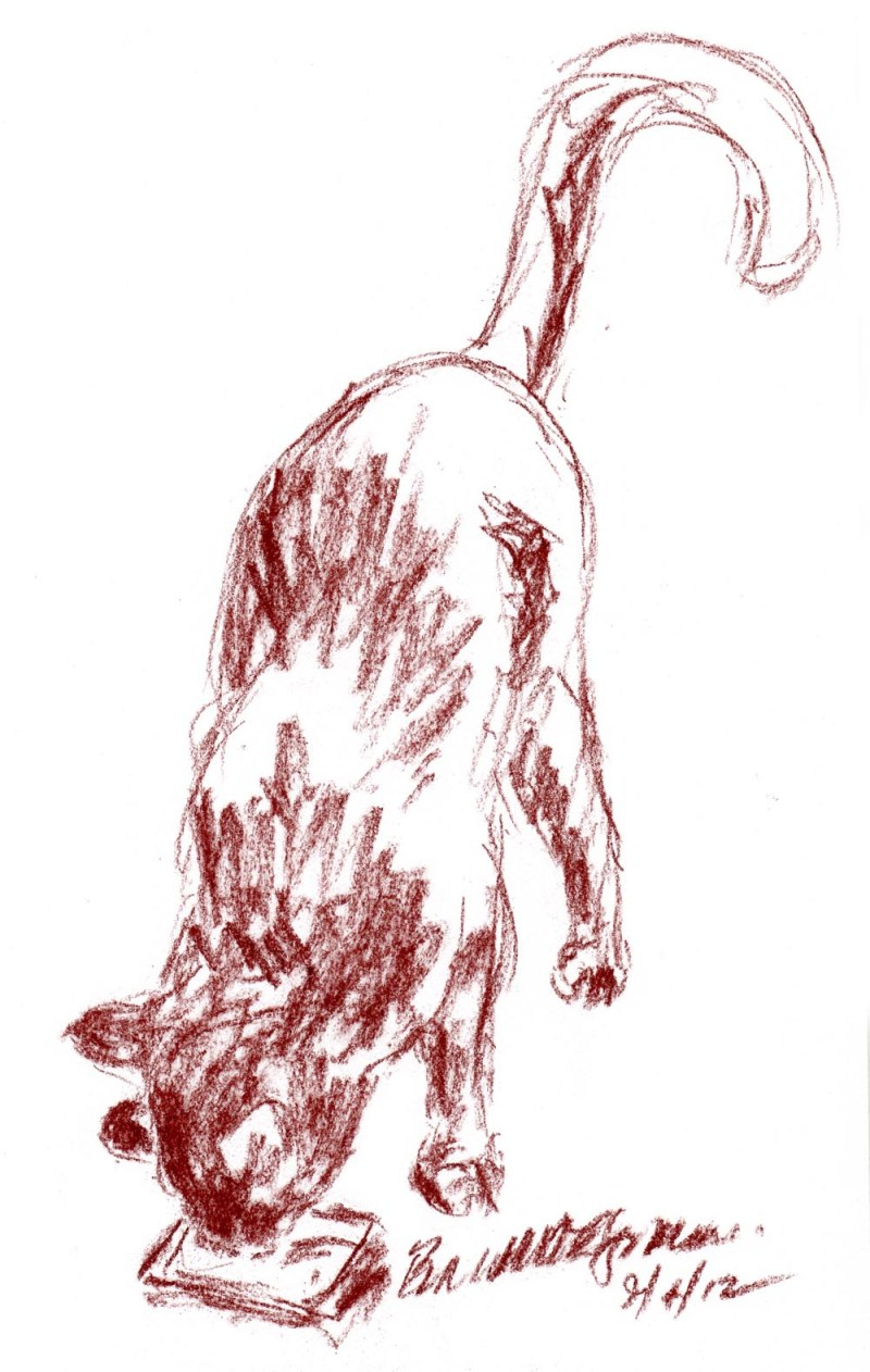 sketch of a cat sniffing catnip pillow