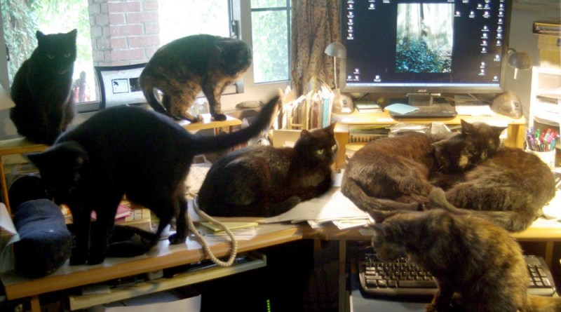 seven cats on desk