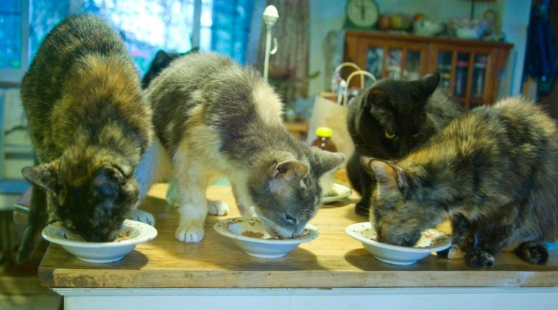 four cats eating