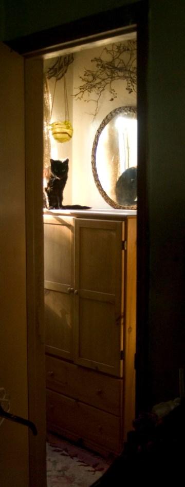 Black cat watching through doorway