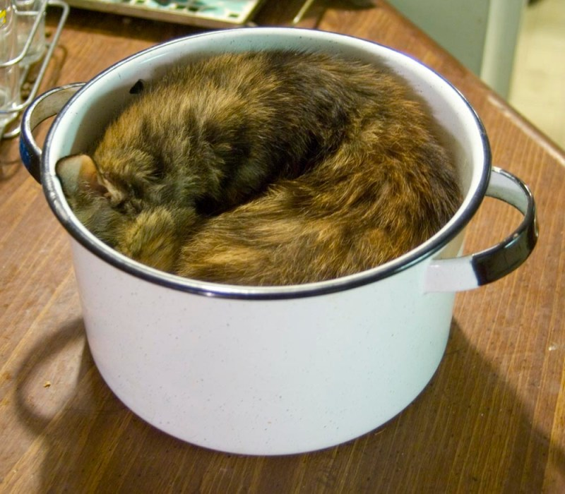 tortoiseshell cat in white enamel pot