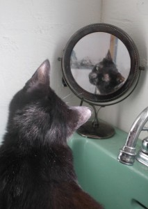 photo of cat looking in mirror