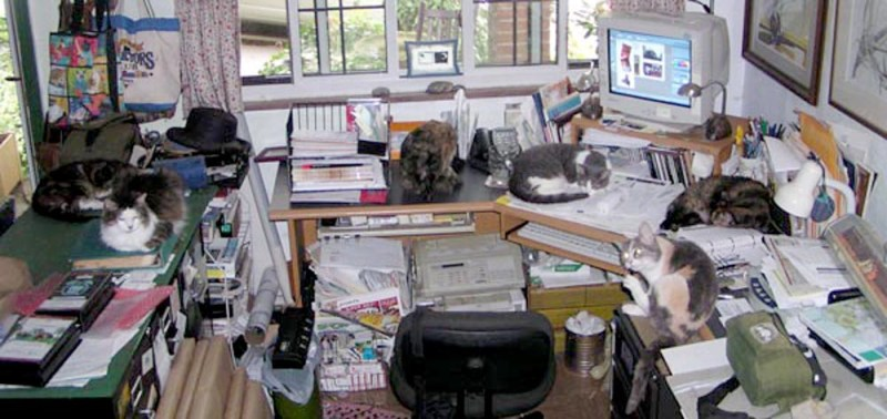 Desk with Six Cats; sometimes my office is not so beautiful! From left it is Stanley, Sophie, Kelly, Namir, Cookie and Peaches. Only Cookie and Kelly are still with me, but still working hard.