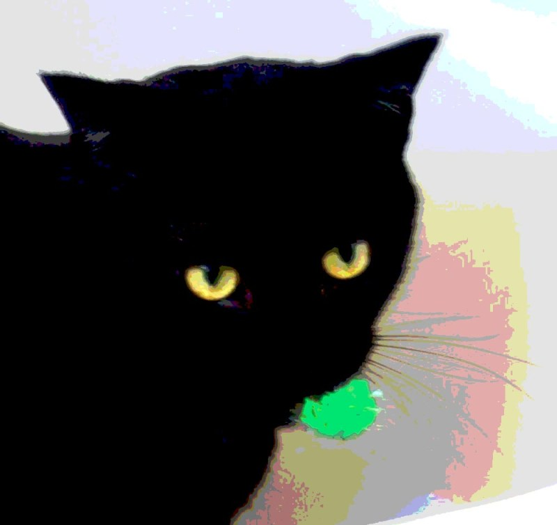 posterized image of black cat with green ball