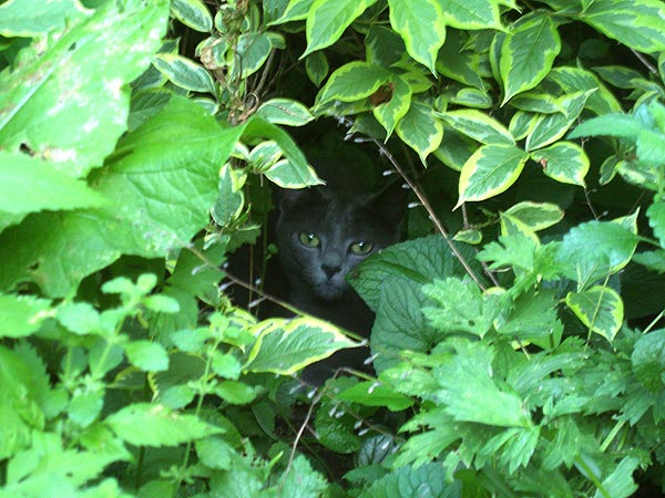 gray kitty under bush