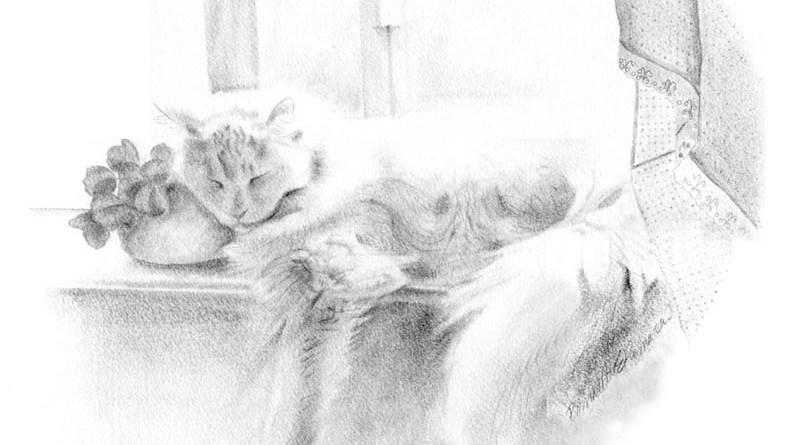 pencil sketch of white cat