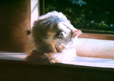 pastel painting of white cat bathing by window