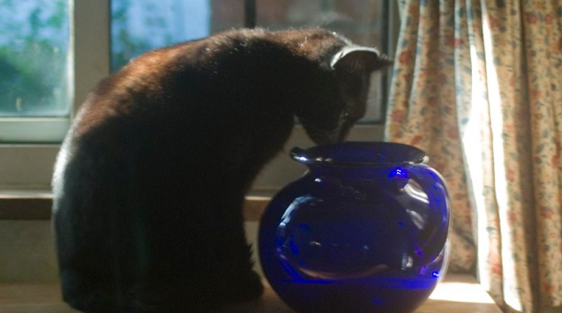 black cat looking into blue vase