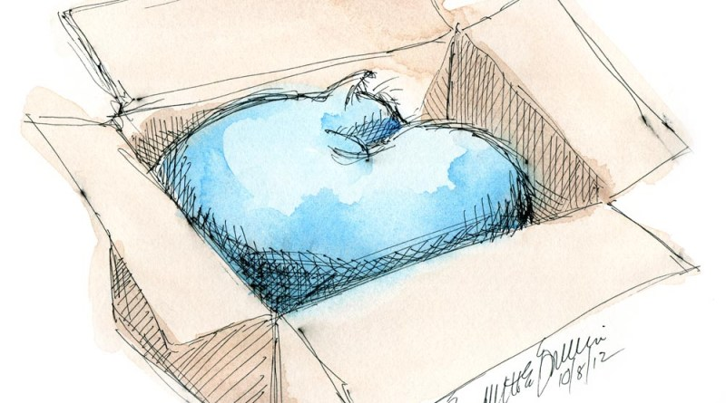 sketch of cat sleeping in box