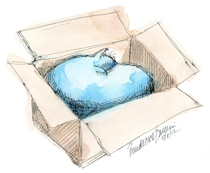 sketch of cat sleeping in box