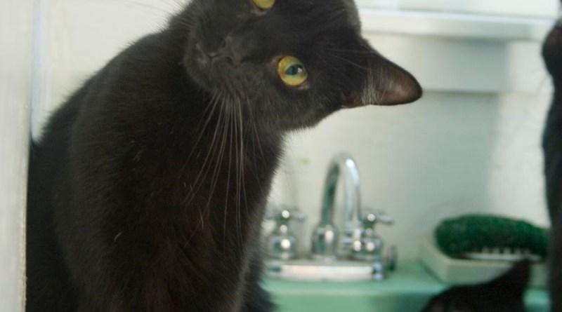 black cat on green sink