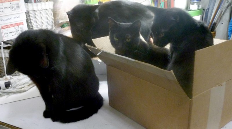 four black cats and box
