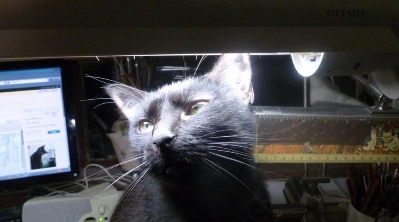 black cat looking up