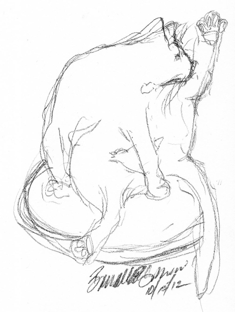 charcoal sketch of cat bathing
