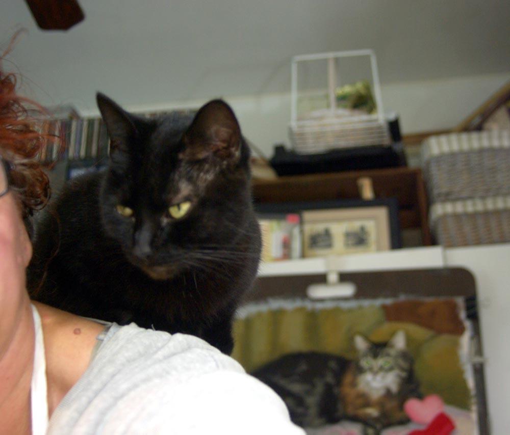 Me Animal Near Shelters Adoption