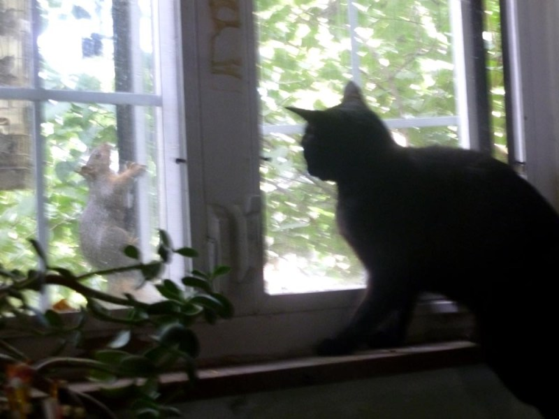 cat at window with squirrel