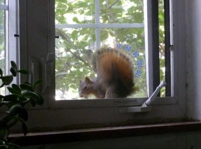 squirrel at window