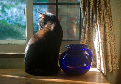 Jelly Bean and the cobalt pitcher amid all the warm tones of autumn.