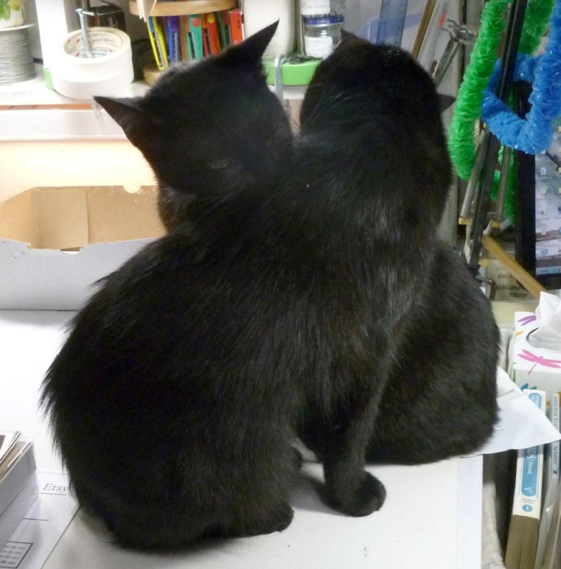two black cats bathing each other