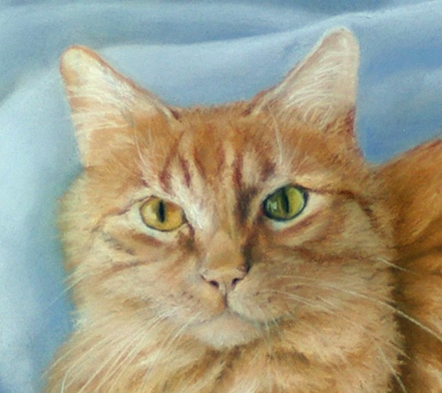 pastel portrait of long-haired orange cat