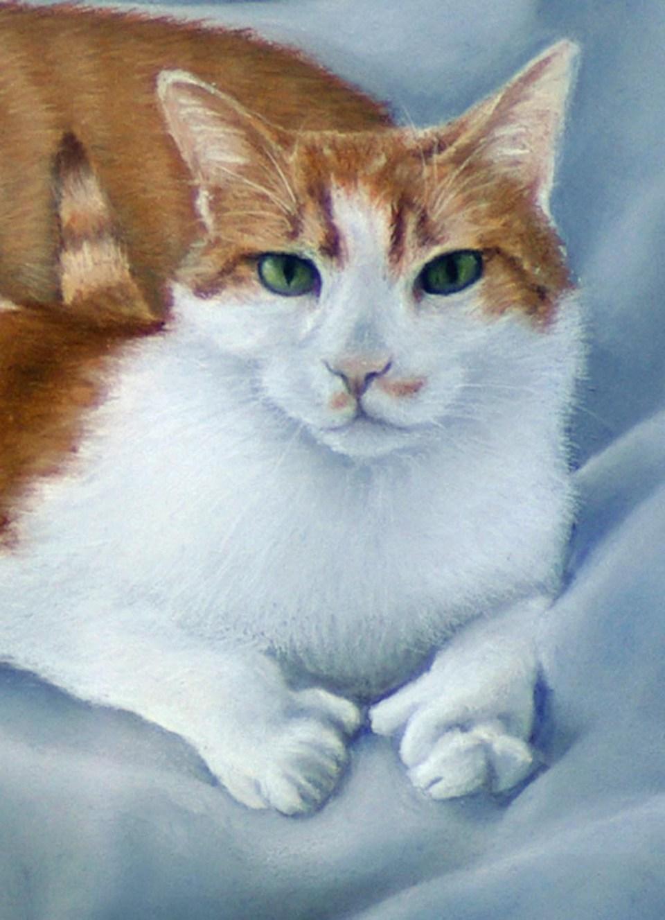 pastel portrait of orange and white cat