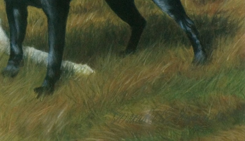 detaIl of portrait of two labrador retriever dogs