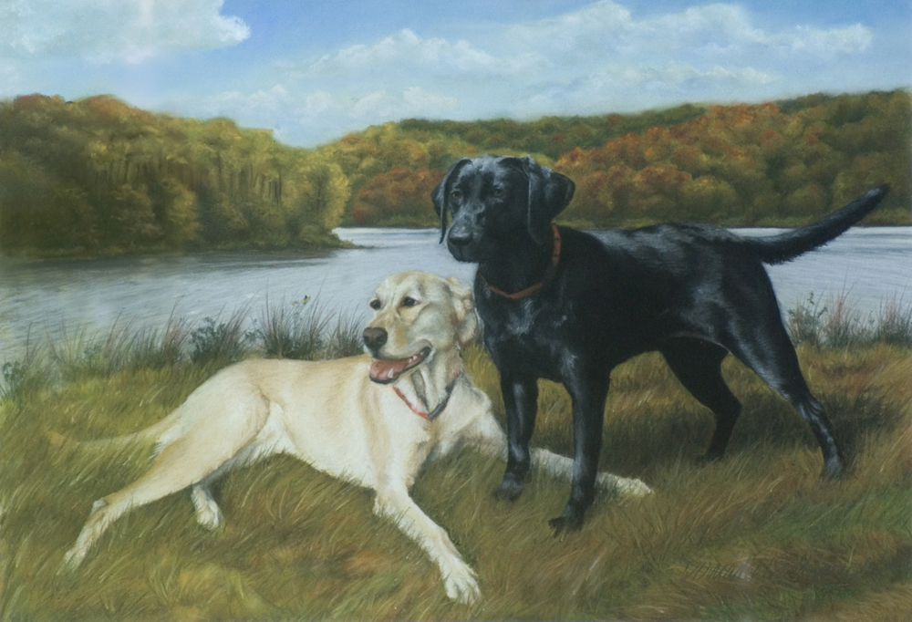 portrait of two labrador retrievers