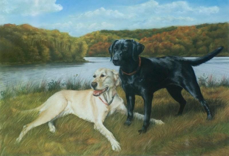 portrait of two labrador retrievers