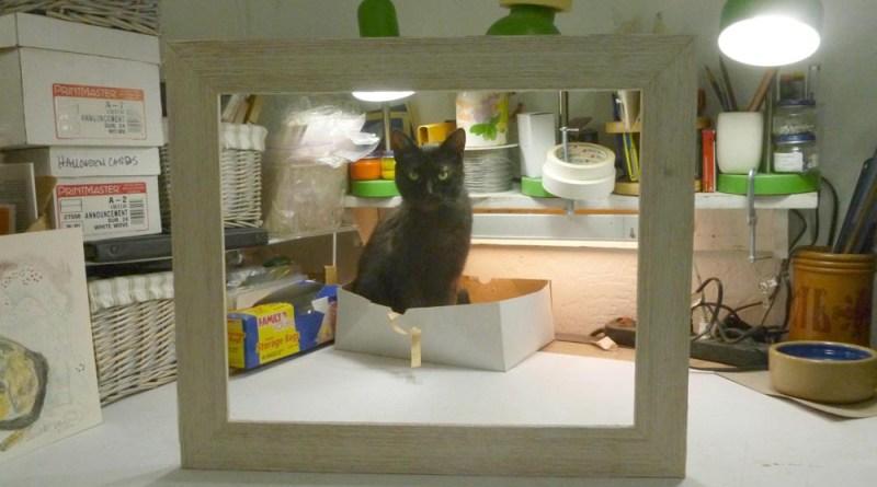 black cat in box in picture frame