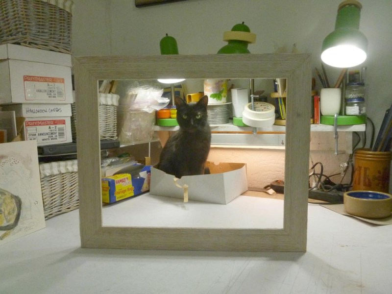 black cat in box in picture frame