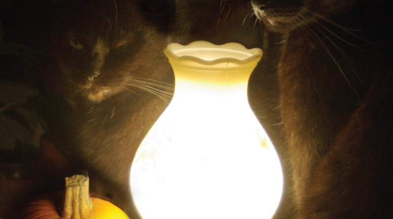 three black cats with lamp and pumpkin
