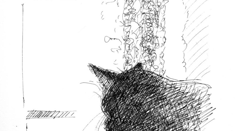 ink sketch of cat sleeping by window