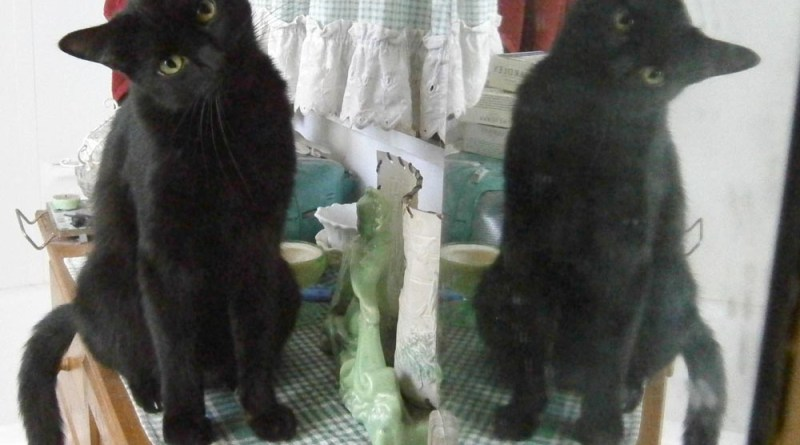 black cat in mirror