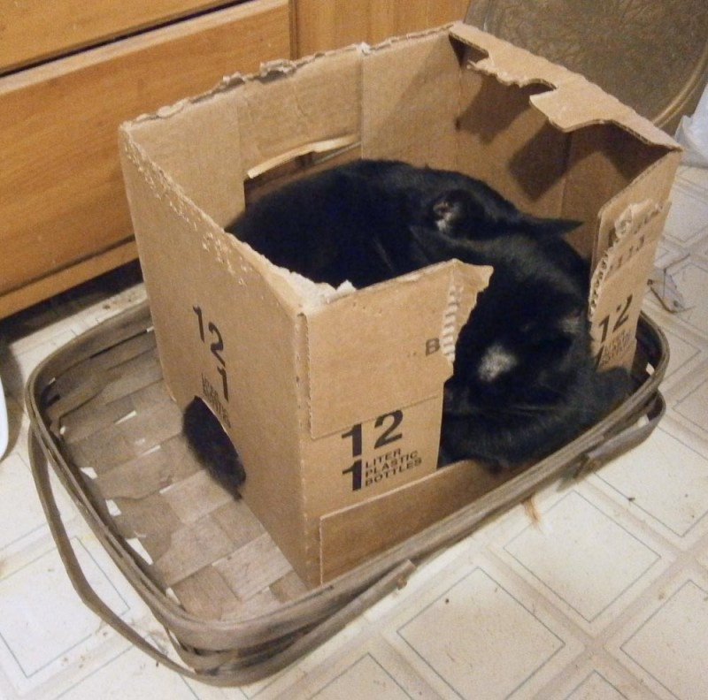 two black cats in a box.