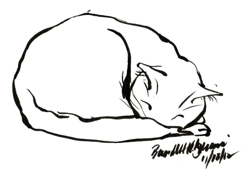 ink sketch of cat napping