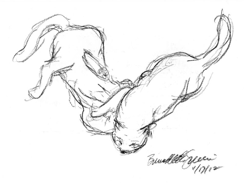 charcoal sketch of cats wrestling
