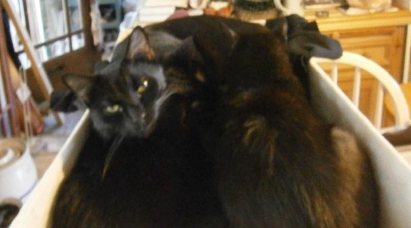 black cat in basket of laundry