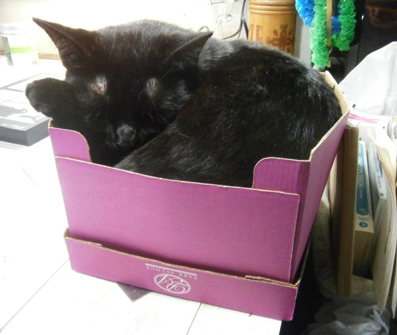 black cat in pink box