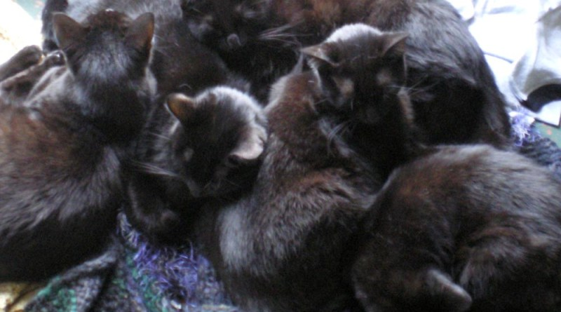 five black cats curled