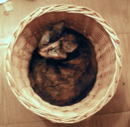 tortoiseshell cat in basket