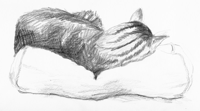 pencil sketch of sleeping cat