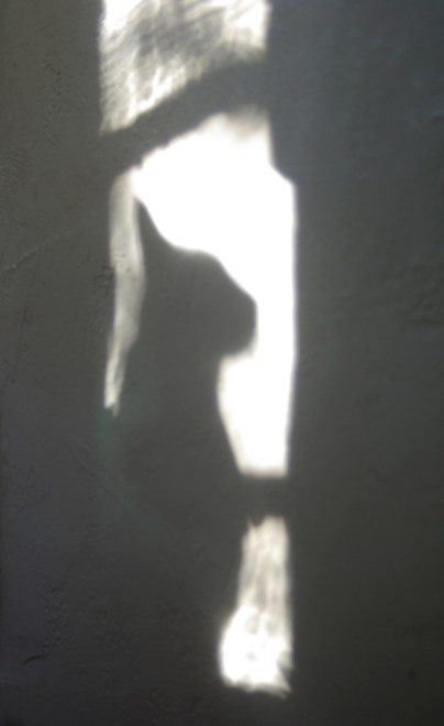 shadow of cat on wall