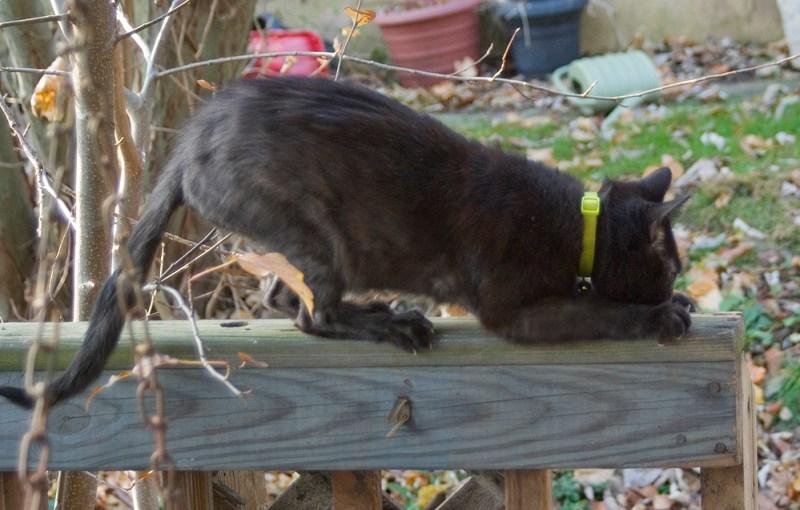 black cat scratching deck rail