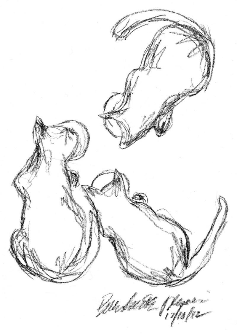 three cats eating