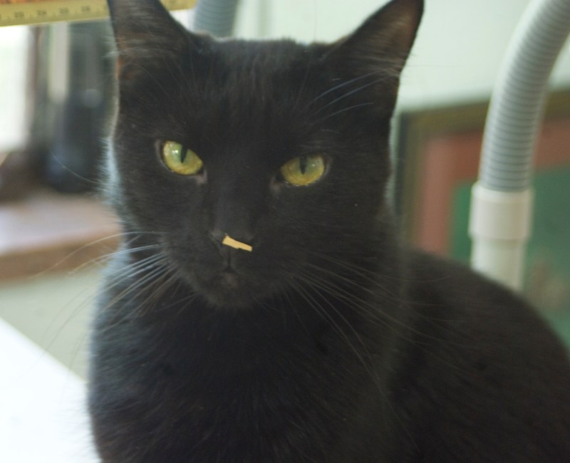 black cat with paper on his nose