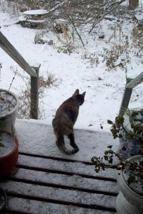 tortoiseshell cat on snowy deck